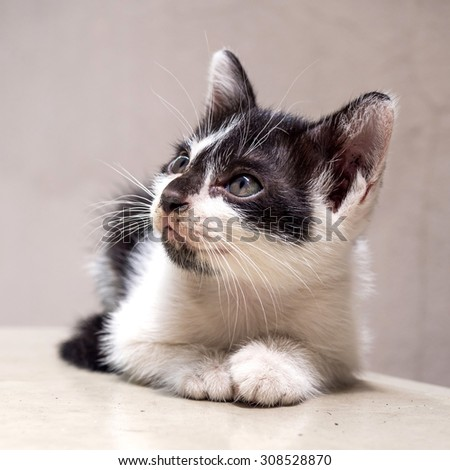 Little cute black and white kitten lay on white floor look to sky, selective focus on its eye, in square aspect frame - stock photo