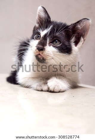 Little cute black and white kitten lay on white floor look to sky with faint reflection, selective focus on its eye - stock photo