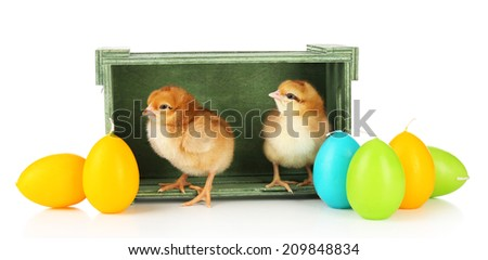 Little cute chickens and Easter candles in wooden box isolated on white - stock photo