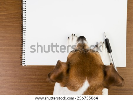 Little cute dog leaned over white notepads. Empty space you can put your information - stock photo