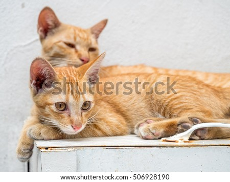 Little cute golden brown kitten live with its mother cat relax in outdoor backyard, selective focus at its eye