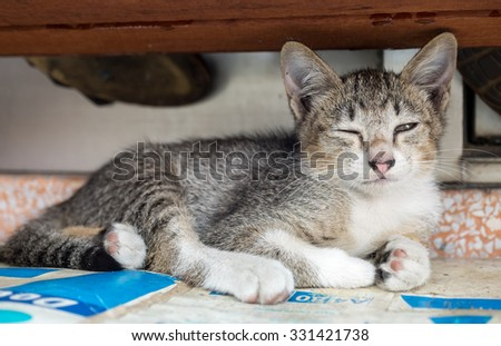 Little cute gray kitten comfortable lay on outdoor corridor, selective focus on its eye