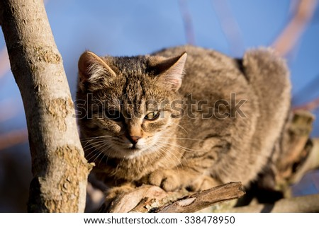 Little cute gray kitten on tree in outdoor garden with blurry background, focus on eyes