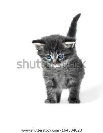 little cute kitten icolated on white background shallow dof - stock photo