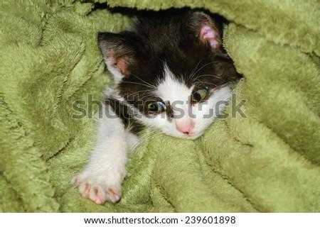 Little Cute Kitten In A Green Towel - stock photo
