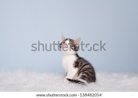 little cute kitten looking up on blue background - stock photo
