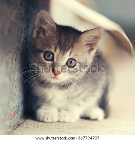 little cute kitten  siting  outdoors
