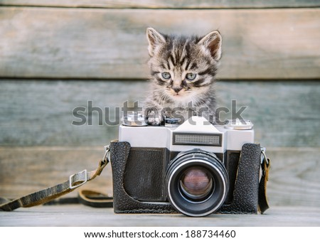 Little cute kitten with vintage photo camera on a wooden table - stock photo