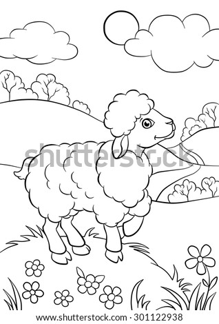 Little cute sheep standing on the field - stock photo