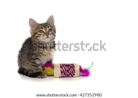 Little cute tabby kitten isolated on white background
