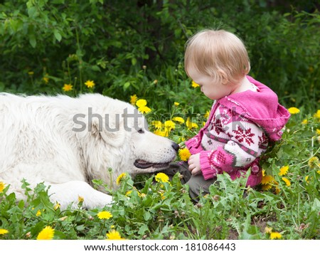 Little cute toddler girl playing with her big white shepherd dog in summer, selective focus on face