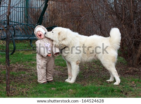Little cute toddler girl playing with her big white shepherd dog. Selective focus - stock photo