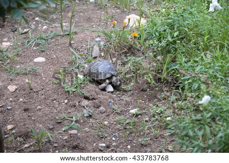 Little cute turtle - stock photo