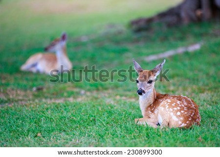 Little deer fawn with white spots lying on grass - stock photo