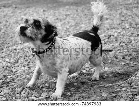 Little Dog - stock photo