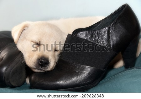 Little dog and black shoes - stock photo