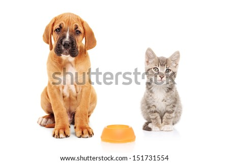 Little dog and cat looking at camera isolated on white background - stock photo