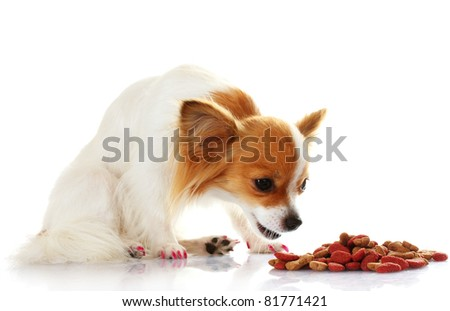 little dog and meal  isolated on white