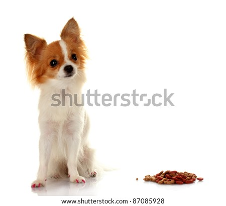 little dog and meal  isolated on white - stock photo