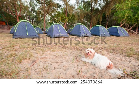 Little dog and Tents on sea beach with pine forest - stock photo