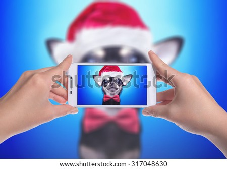 Little dog chihuahua celebrates Christmas in a Santa Claus hat. New Year's holidays. Mobile photo. Mobile Technologies - stock photo