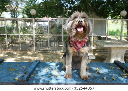 Little dog wearing bandara sitting on blue floor with tree shade
