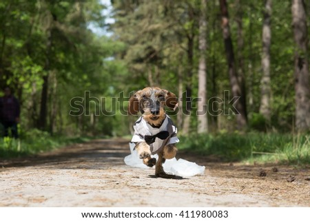 Little dog with wedding clothes