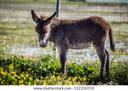 Little donkey surprised by a camera