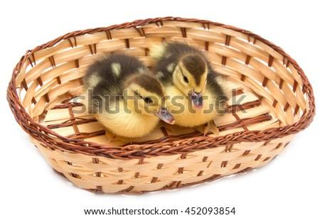 little duck in a basket - stock photo