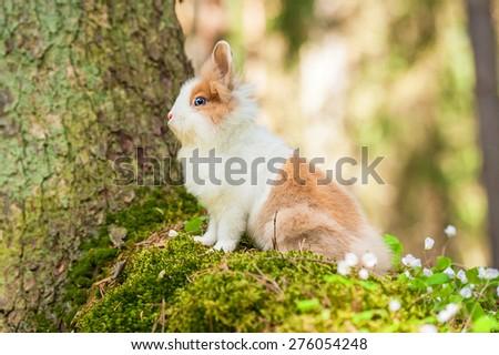 Little dwarf rabbit sitting on the hill - stock photo