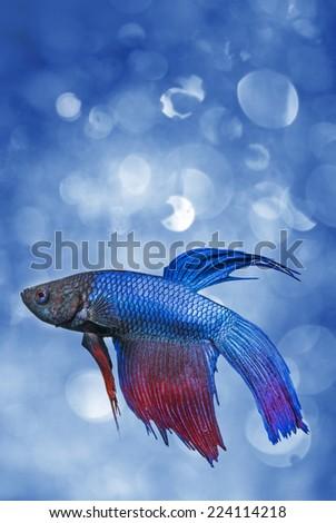 little fish - stock photo