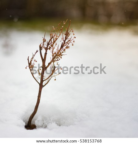 little flower coming out from real snow