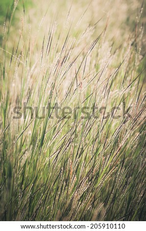little flower weed in the garden or nature park Thailand vintage - stock photo