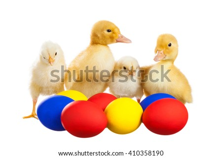 Little fluffy chickens and ducklings with colored eggs - stock photo