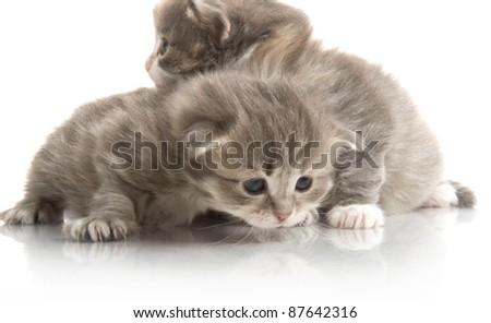 little fluffy kitten makes the first steps - stock photo