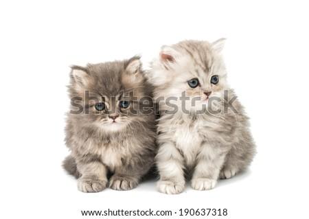 little fluffy kittens on a white background - stock photo