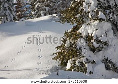 little footprint on the snow - stock photo