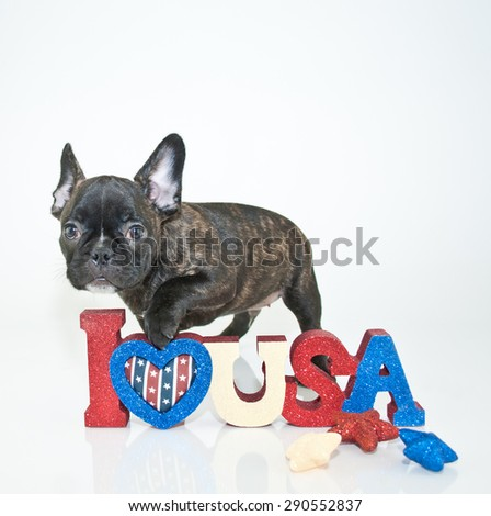Little French Bulldog puppy with his paw on an I Love USA sign, on a white background.