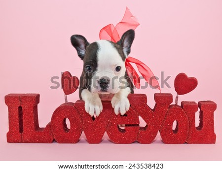 Little Frenchie puppy leaning on a sign that says I love you.