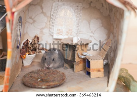 Little funny hamster in a small imagine home. - stock photo