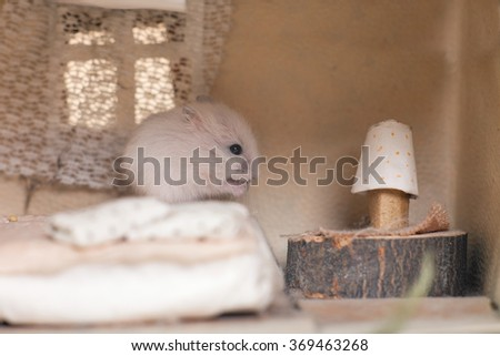 Little funny hamster on the bed in a small imagine home. - stock photo