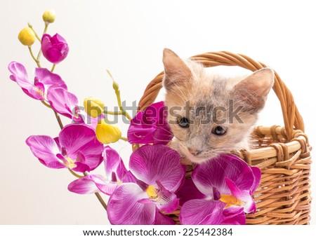 Little funny kitten in studio on light background - stock photo