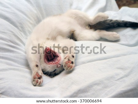Little funny kitten lying down and yawning. - stock photo