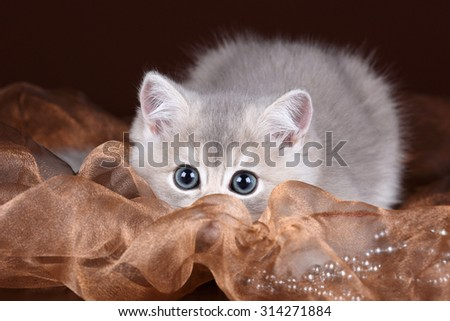 Little funny kitten on a brown background