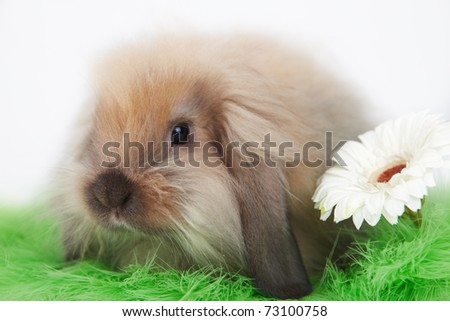 Little funny rabbit with flower on grass