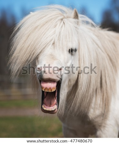 Pony Stock Images Royalty Free Images Amp Vectors
