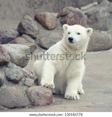 Little funny white polar bear - stock photo