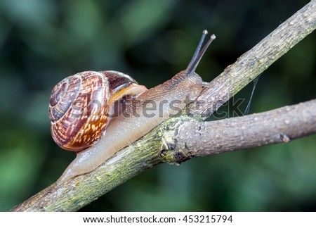 Little garden snail crawling on a branch - stock photo
