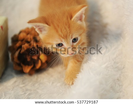 Little ginger kitten on a white fluffy rug with large pine cones. Christmas spirit