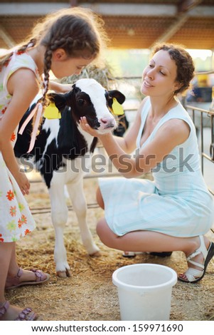 Little girl and her mother caress calf at cow farm at sunny day. Focus on calf. - stock photo